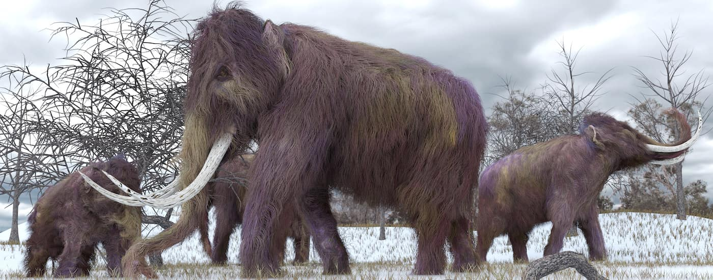 Painting of Woolly Mammoths
