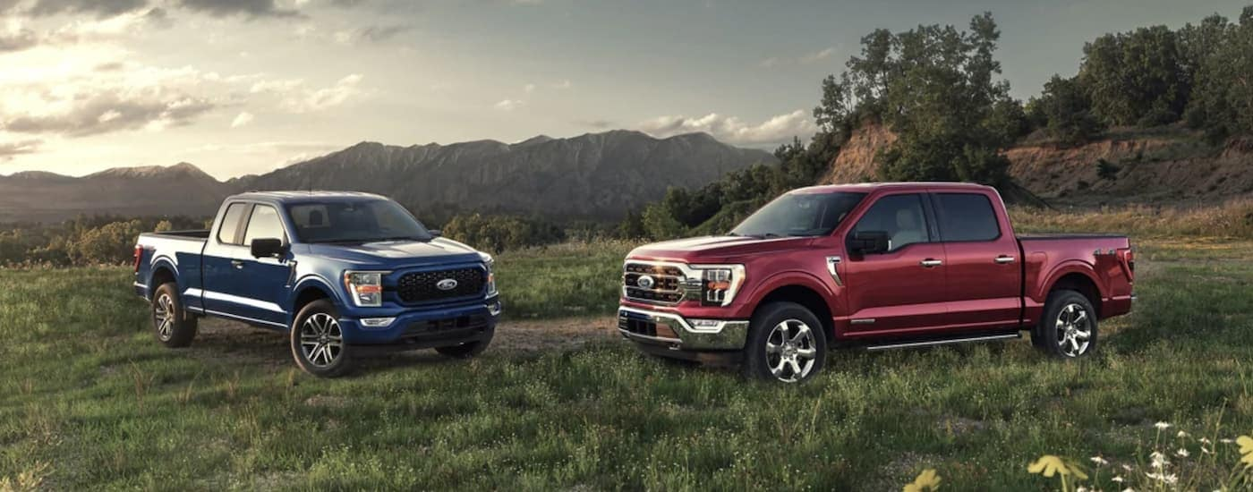 A red and a blue 2021 Ford F-150 are parked on grass in front of mountains.