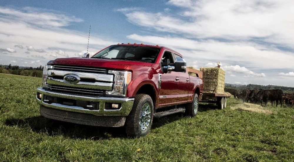 Red 2018 Ford F-250 pulling a trailer with hay on it in a cow field