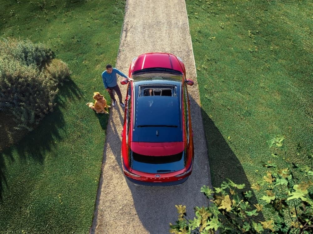 overhead shot of a red 2020 Ford Escape small SUV parked on a dirt driveway with a man and dog standing beside it
