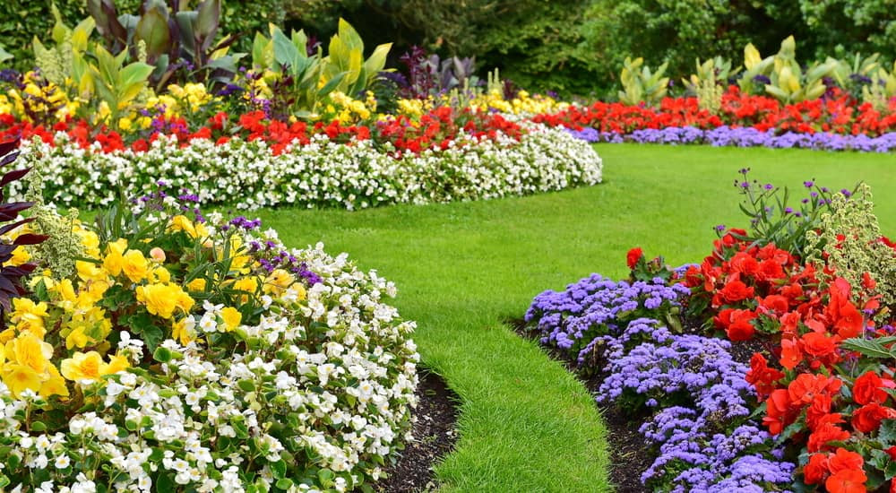 Clean landscape with white, yellow, red, and purple flowers surrounding sharp, green grass