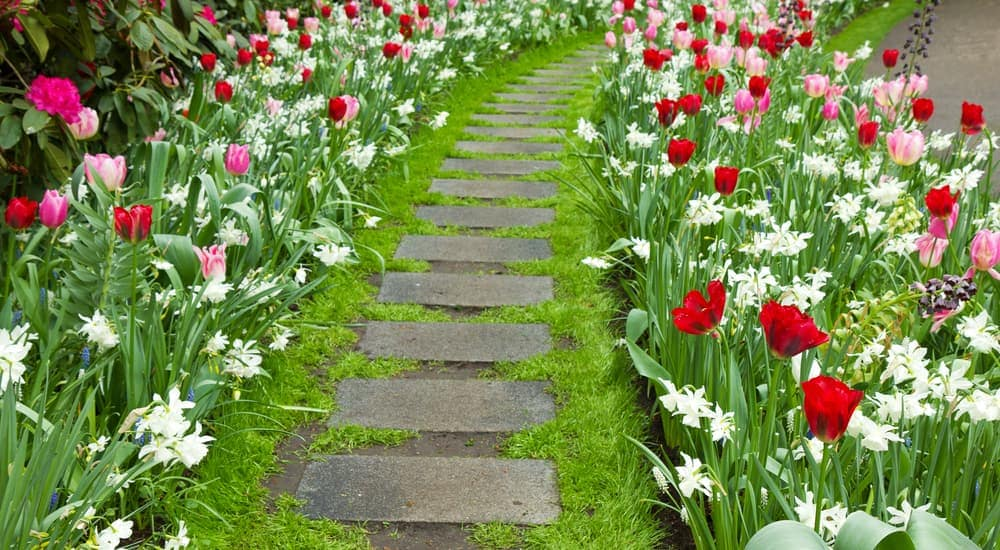 A walkway that's surrounded by flowers is shown.