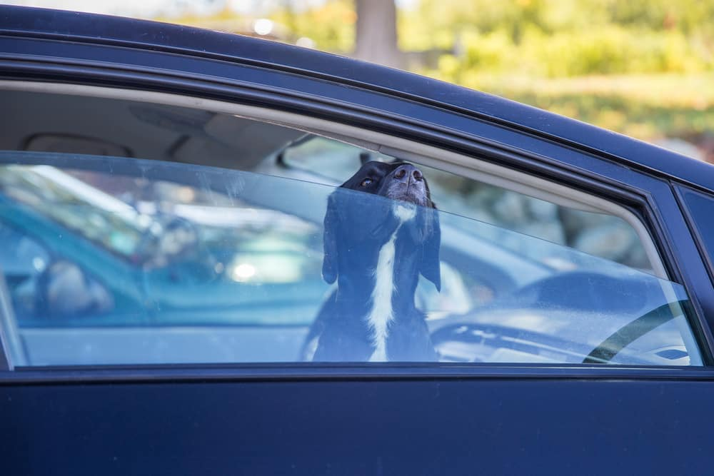 Summer Pet Safety Greensburg Pa Hillview Motors