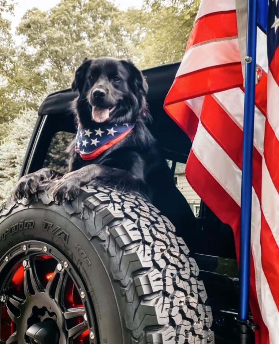 Hollywood chrysler Jeep National Dog Day
