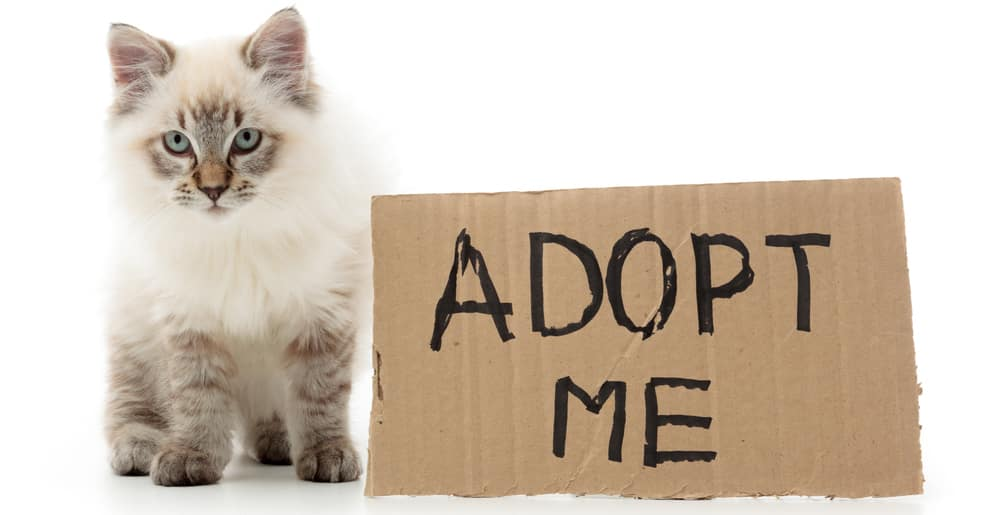 Celebrate National Adopt a Cat Month