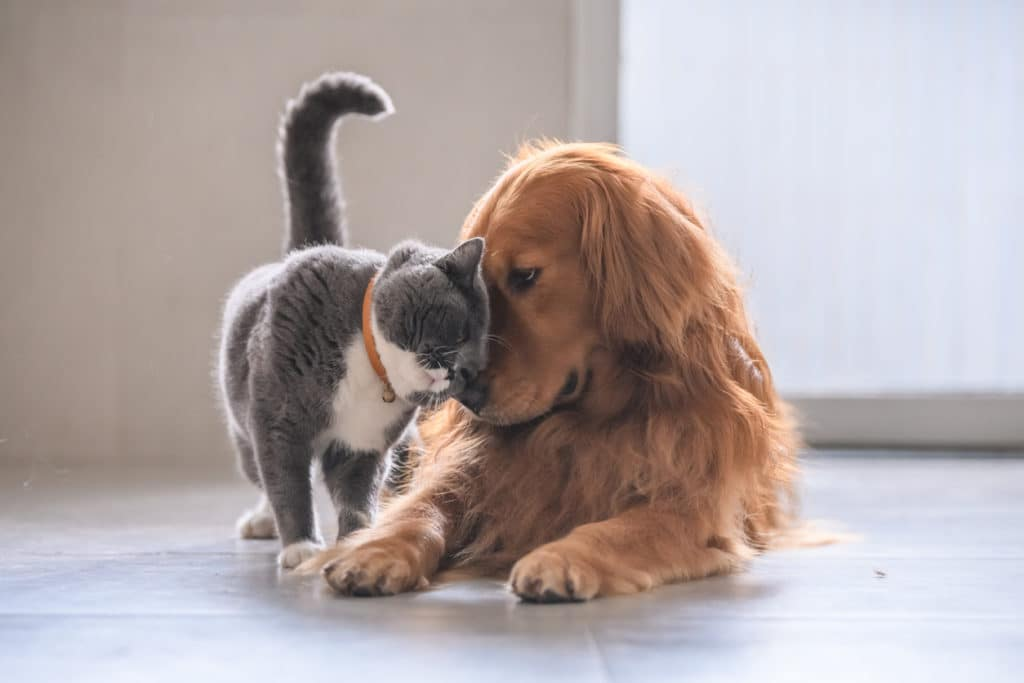Best Friends - cat and dog