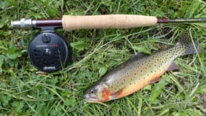 Detroit Lakes to Fish | Ray Laethem CDJR
