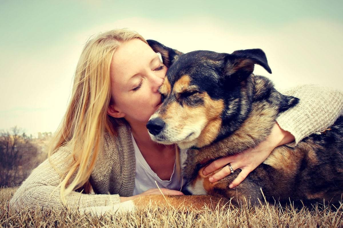 Helpful Honda Pet Adoption