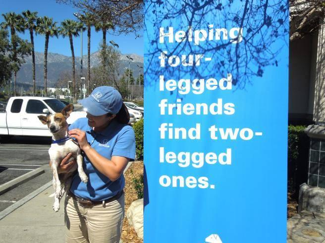 Helpful Honda Pet Adoptions 2014