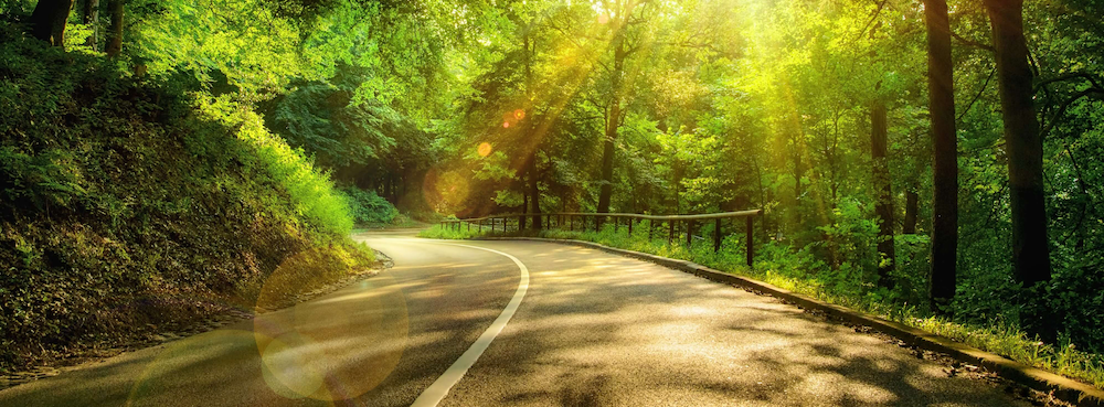 Scenic two-lane road surrounded by trees with the sun shining