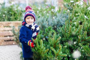 Festive Christmas Tree Farm