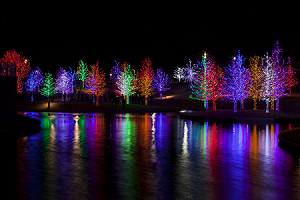 Trees Lit Up During the Holidays
