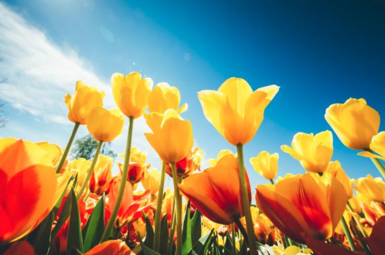Warrenton This Spring