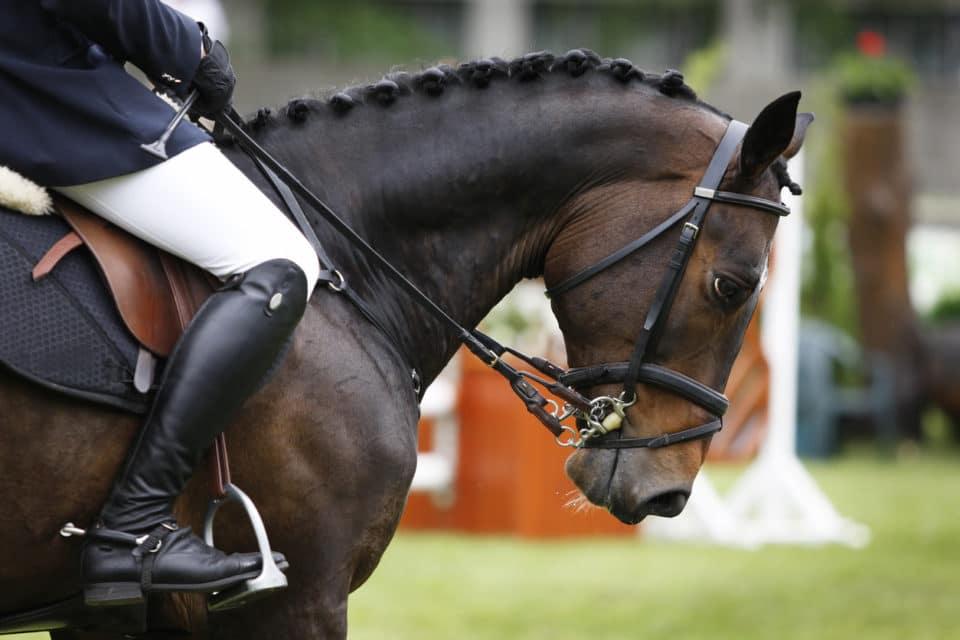 Warrenton Horse Show