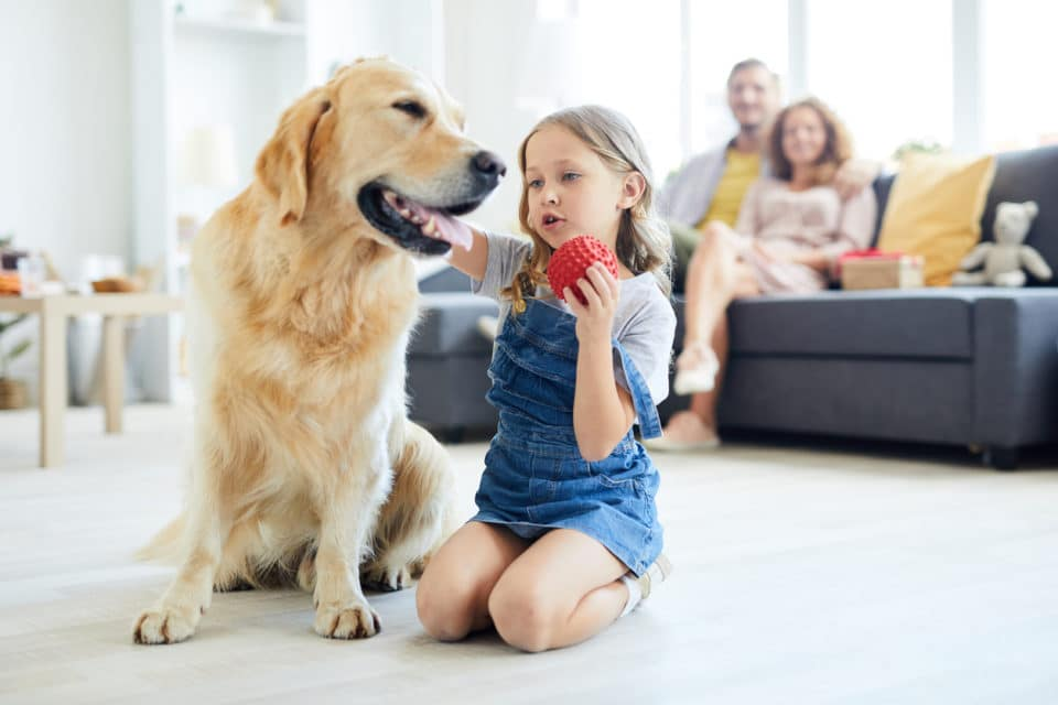 Parent's watching little girl play with their family dog